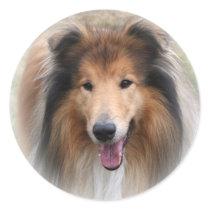 Collie dog stickers