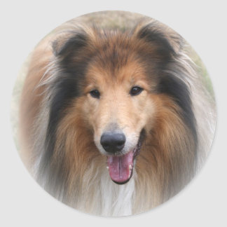 collie dog stickers,  gift idea