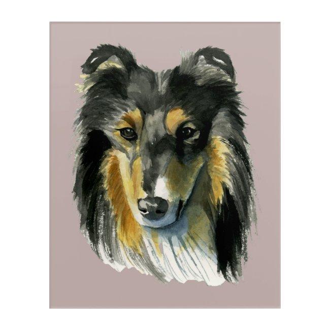 Collie Dog Watercolor Illustration