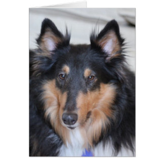 Collie Head Shot, Tri-Colored Rough Coat Collie Greeting Card
