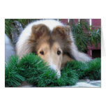 Collie Holiday Card