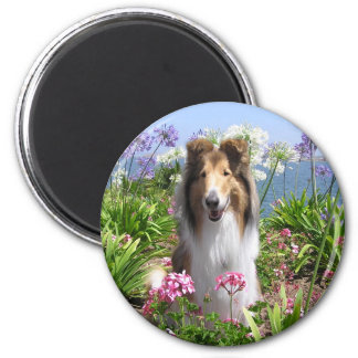 Collie in Flowers Magnet