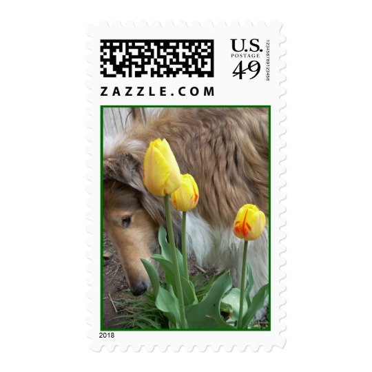 Collie in spring postage