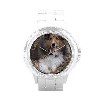 Collie lindo reloj