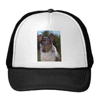 Collie liso gorra