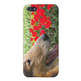 Collie N The Tulips iPhone 4 case
