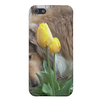 Collie n Tulips iPhone4 case