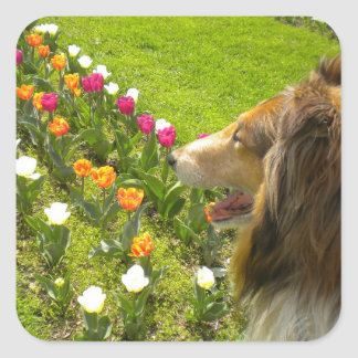 Collie N Tulips Stickers