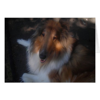 Collie note card
