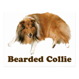 Collie Post Card