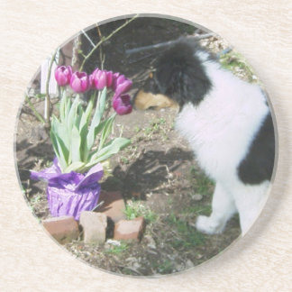 Collie Pup Smells the flowers Drink Coaster