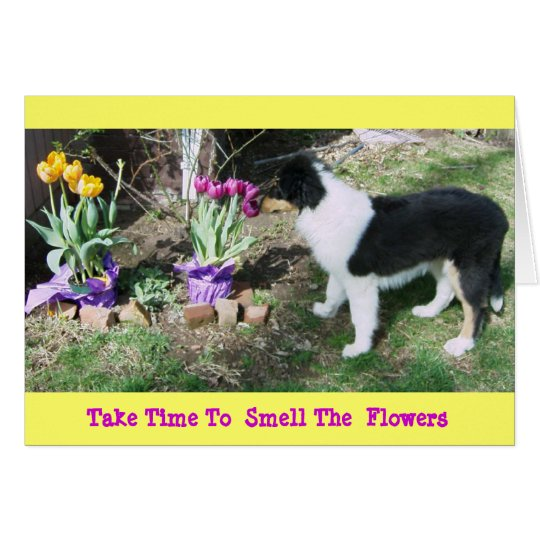 Collie Pup/Tulips Take Time 2 Smell The  Flowers Card
