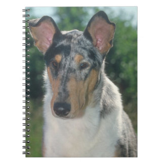 Collie Smooth Merle Dog Notebook