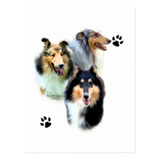 Collie Trio Post Cards