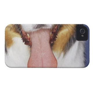 Collie wagging tongue iPhone 4 case