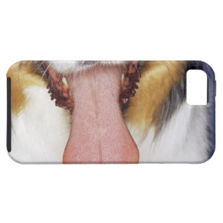 Collie wagging tongue iPhone SE/5/5s case