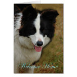 Collie Welcome home. Glad you are home again. Greeting Cards