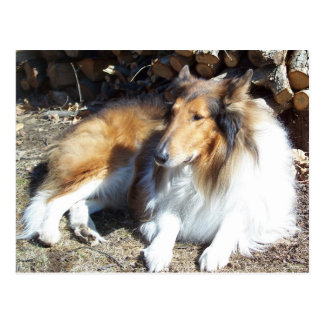 Collie With Firewood Postcards