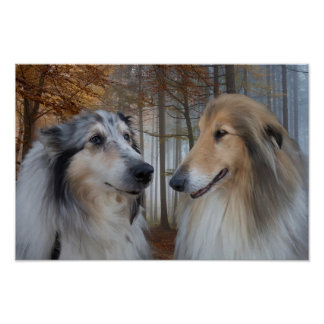 Collies Digitally Painted Poster
