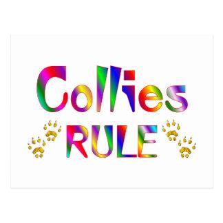 Collies Rule Postcard