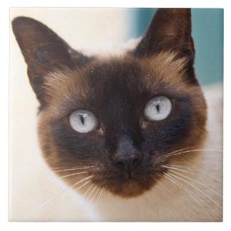 Collioure. El Rosellón. Un gato de la calle. Franc Azulejo Cuadrado Grande