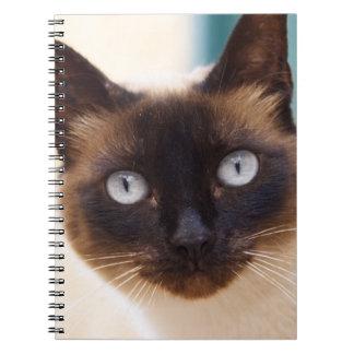 Collioure. El Rosellón. Un gato de la calle. Franc Libro De Apuntes