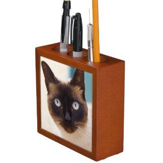 Collioure. El Rosellón. Un gato de la calle. Franc