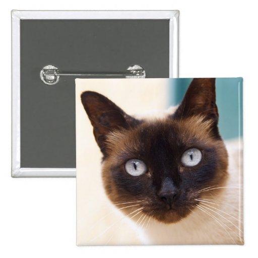 Collioure. El Rosellón. Un gato de la calle. Franc Pins