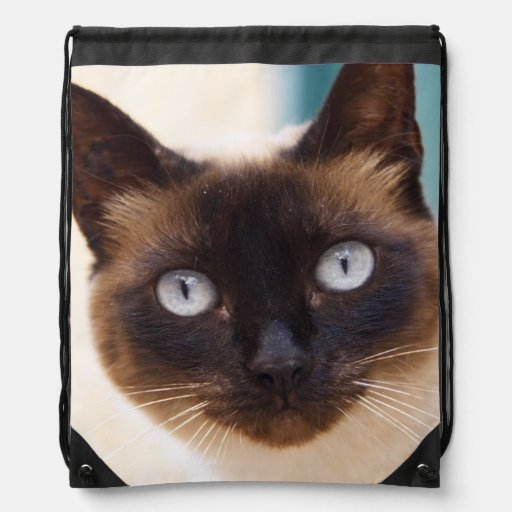 Collioure. El Rosellón. Un gato de la calle. Franc Mochilas