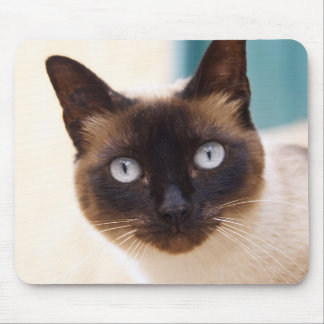 Collioure. El Rosellón. Un gato de la calle. Franc Tapetes De Ratón