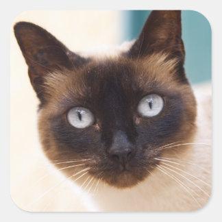 Collioure. El Rosellón. Un gato de la calle. Pegatina Cuadrada