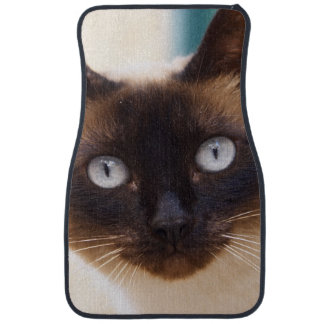 Collioure. Roussillon. A street cat. France. Car Mat
