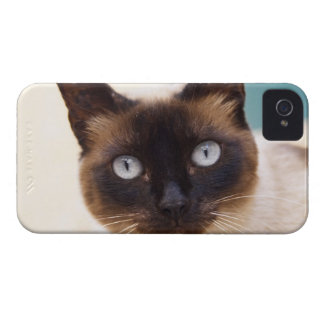 Collioure. Roussillon. A street cat. France. Case-Mate iPhone 4 Case