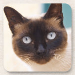 Collioure. Roussillon. A street cat. France. Drink Coaster