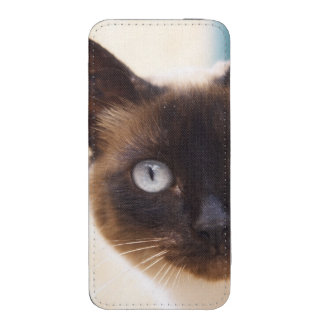 Collioure. Roussillon. A street cat. France. iPhone 5 Pouch