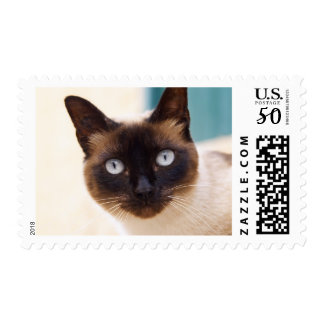 Collioure. Roussillon. A street cat. France. Postage