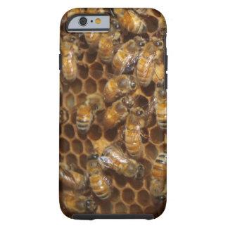 Colmena de la abeja funda resistente iPhone 6