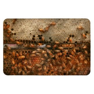 Colmenar - abeja - éxito dulce imanes rectangulares