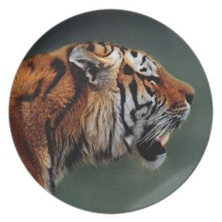 Colmillos de los tigres plato