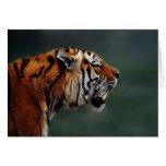 Colmillos de los tigres tarjeta