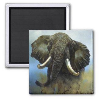 Colmillos elefantes imán para frigorifico