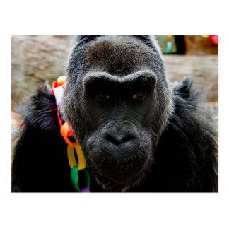 Colo the Gorilla Postcard