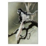 Colobus Blank Card by Andrew Denman