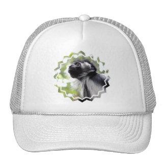 Colobus Monkey Profile  Baseball Hat