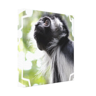 Colobus Monkey Profile Canvas Print