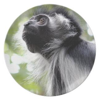 Colobus Monkey Profile Plate