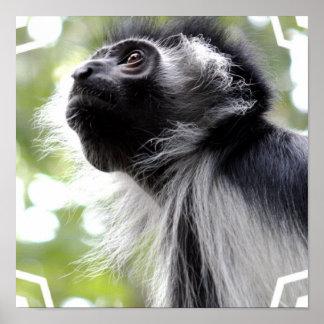 Colobus Monkey Profile Poster