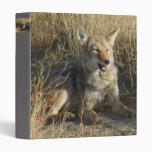 Colocación del coyote R0018