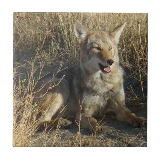 Colocación del coyote R0018 Azulejo Cuadrado Pequeño