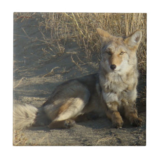 Colocación del coyote R0019 Azulejo Cuadrado Pequeño